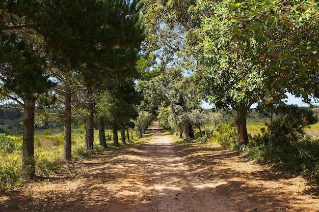 Красивая гравийная дорога в окружении деревьев и покрытых травой полей Бесплатные Фотографии