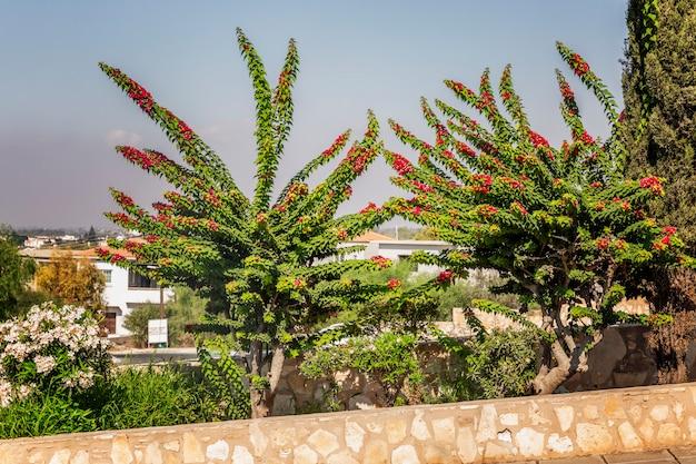南国のリゾート地にあるピンクの花と美しい緑の茂み。 Premium写真