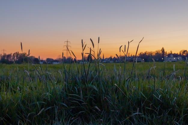 夕日を背景に美しい緑の野原 無料写真