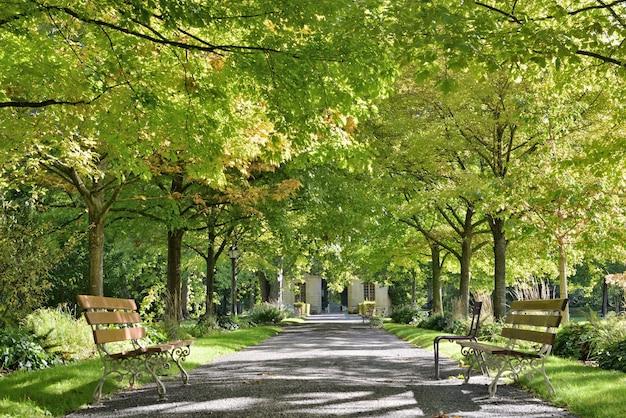 나무의 아름다운 녹색 단풍은 두 개의 빈 벤치가있는 공공 공원에서 골목을 Borded 프리미엄 사진