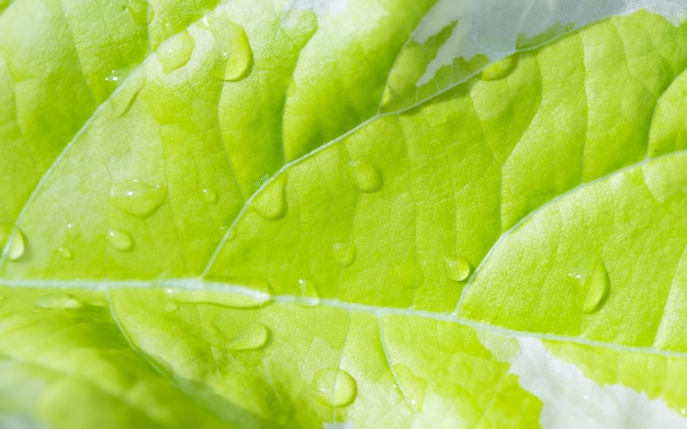 Beautiful green leaf and water drops in morning light background Premium Photo