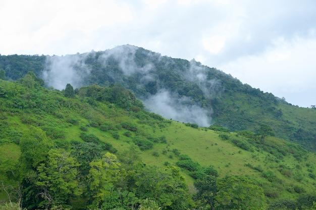 雨季、熱帯気候の美しい緑の山の景色 Premium写真