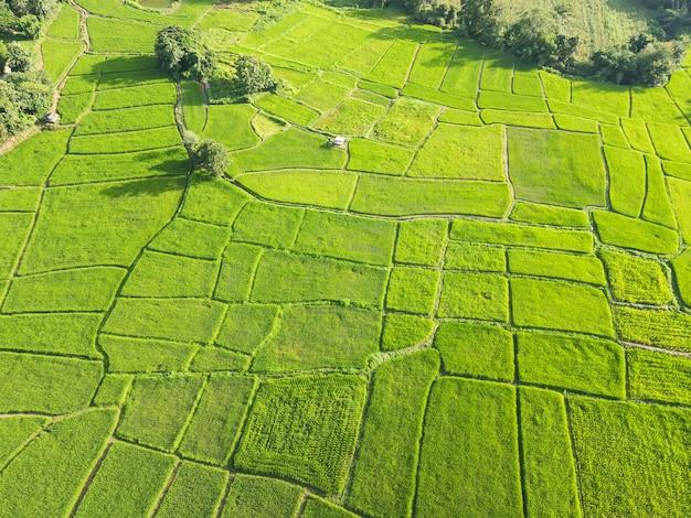 ドローンからの美しい緑の田んぼ Premium写真
