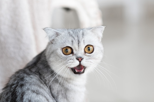 Free Photo Beautiful Grey Tabby Cat With Yellow Eyes Stands On White Floor