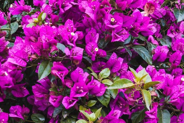 부겐빌레아의 아름다운 높은 각도 샷 무료 사진