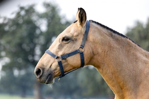 Beautiful horse in the countyside Premium Photo