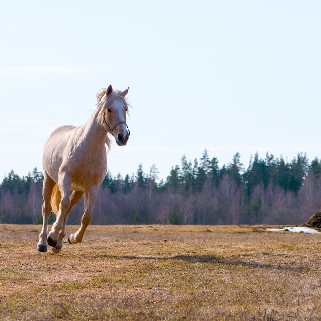Beautiful horse runs Premium Photo
