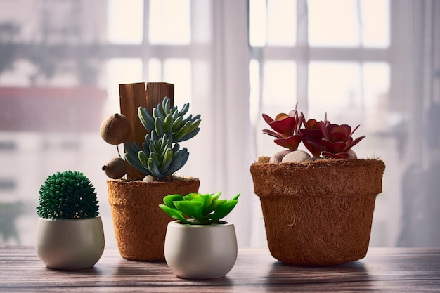 Belle piante da appartamento in vasi di fiori sul tavolo Foto Gratuite