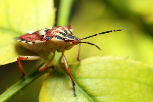 Красивое насекомое на сочном зеленом листе Premium Фотографии