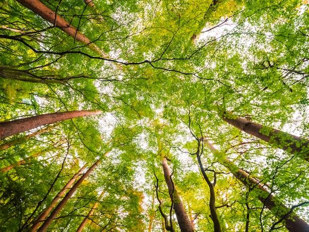 Bellissimo paesaggio di grande albero nella foresta con vista bassa angelo Foto Gratuite
