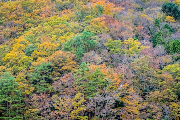 Beautiful landscape a lot of tree with colorful leaf around the mountain Free Photo