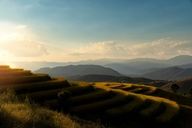 Beautiful landscape view of rice terraces in chiang mai, thailand. Premium Photo