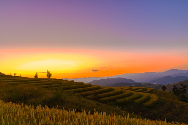 Beautiful landscape view of rice terraces in chiang mai , thailand. Premium Photo