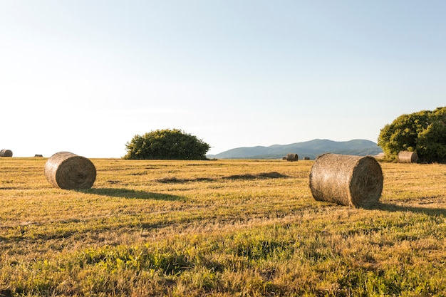 Beautiful landscape with dried field Free Photo