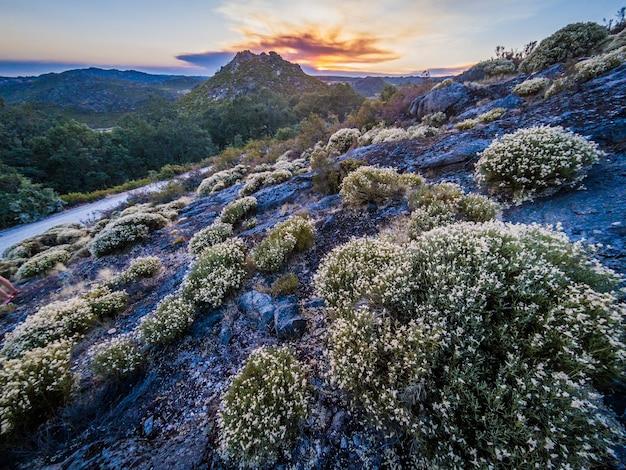 Bellissimo paesaggio con molti cespugli nel parco naturale di montesinho Foto Gratuite