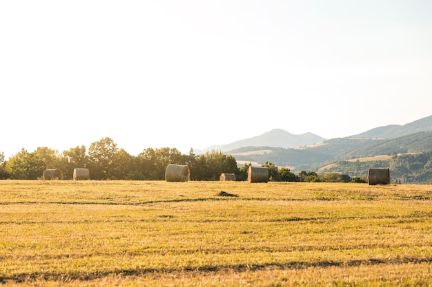 Beautiful landscape with rolls of hays in field Free Photo