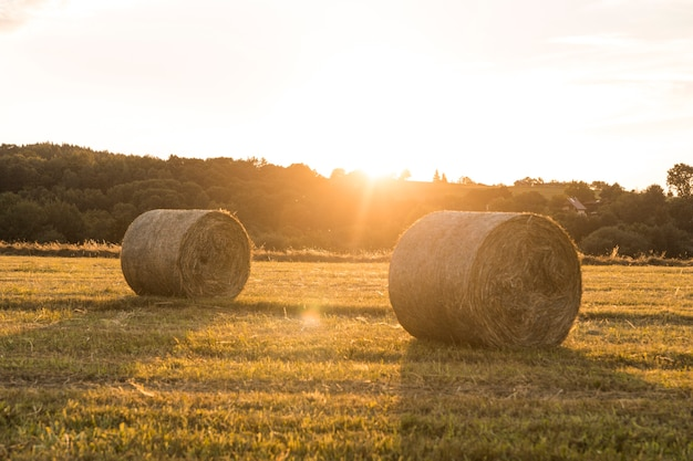 Beautiful landscape with rolls of hays and sunset Free Photo