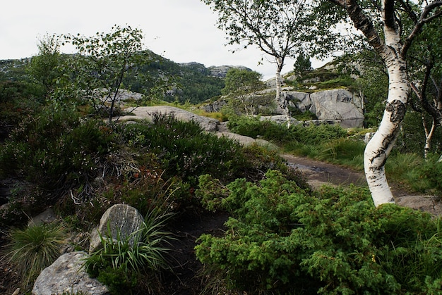 Красивый пейзаж с деревьями и зелеными растениями в прекестулене, ставангер, норвегия Бесплатные Фотографии