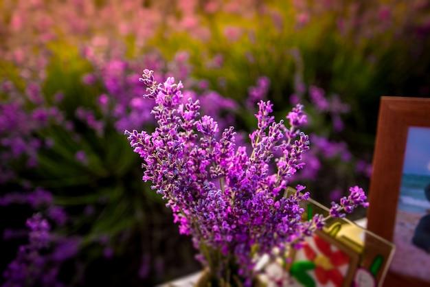 Красивые цветки лаванды закрывают вверх на поле во время захода солнца. природа Premium Фотографии