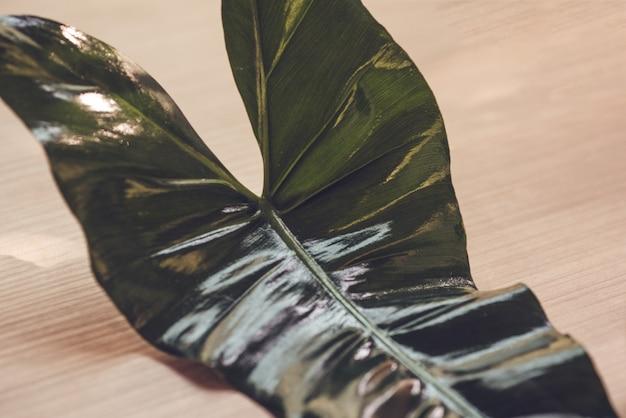 Beautiful leaves Premium Photo