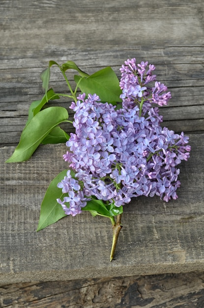 Beautiful lilac on a wooden background Premium Photo