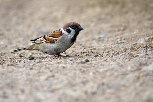 Beautiful little bird wild in nature Free Photo