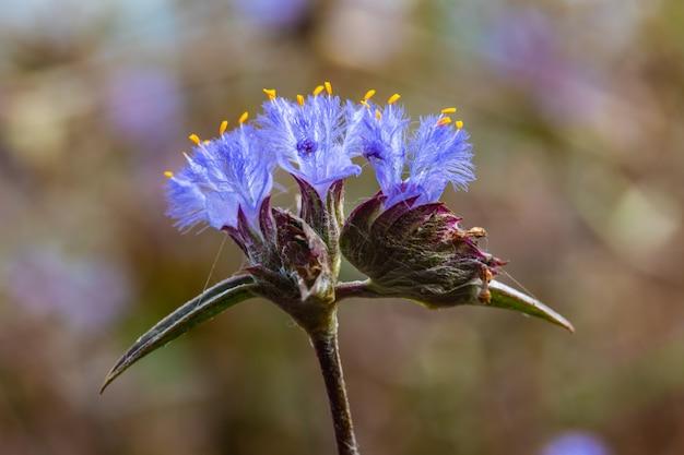 Красивые маленькие цветы в природе Premium Фотографии
