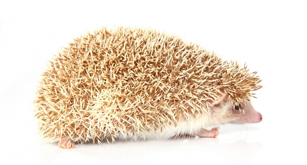 Bellissimo piccolo hedghog Foto Gratuite