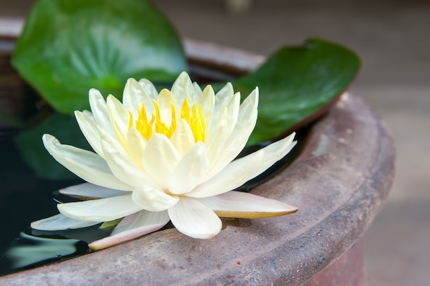 Image result for lotus blooming images
