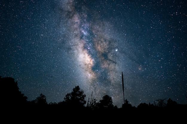 푸른 별이 빛나는 밤하늘 아래 숲의 아름다운 낮은 각도 샷 무료 사진