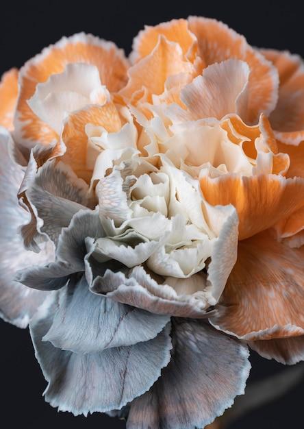 美しいマクロ咲いた花 無料写真