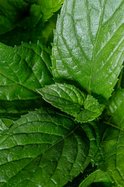 아름 다운 매크로 녹색 식물 개념 무료 사진