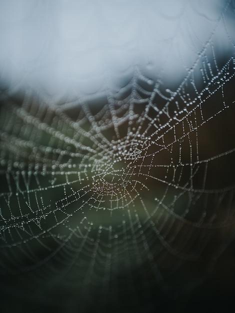 森の中の蜘蛛の巣の美しいマクロ写真 無料写真