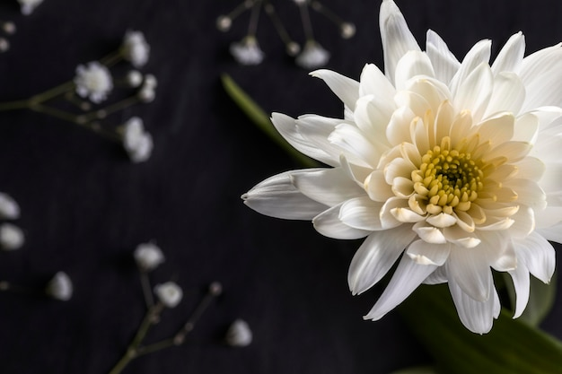 Beautiful macro white flower Free Photo
