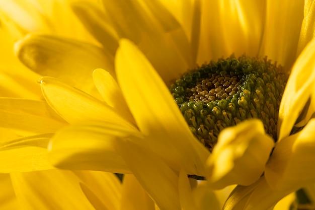 美しいマクロ黄色い花 Premium写真