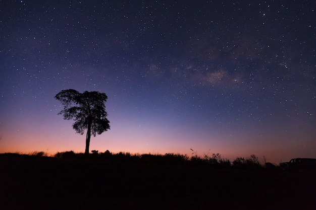 Beautiful milky way and silhouette of tree on a night sky before sunrise Premium Photo