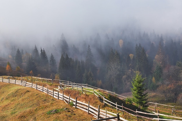 Beautiful morning fog and sunbeams on mountain slope in autumn pine forest. Free Photo
