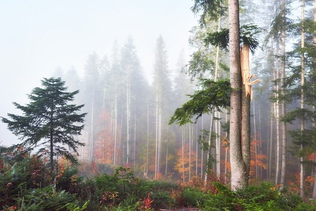 Beautiful morning in misty autumn forest with majestic colored trees. Free Photo