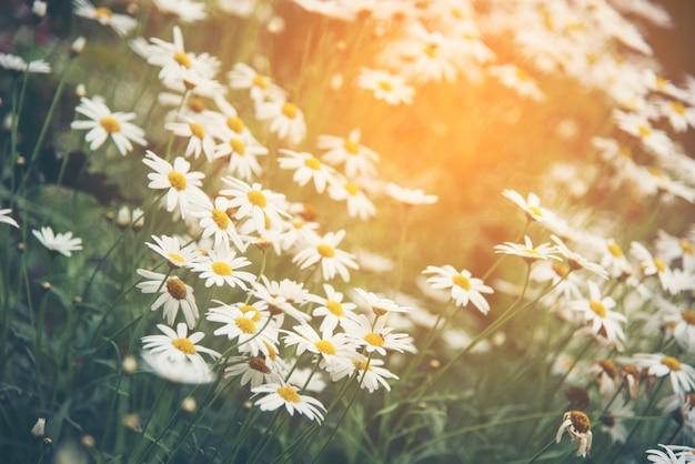 Homélie Audio: vous avez 10 minutes ?  - Page 11 Beautiful-natural-flowers-with-sunlight-evening_33755-5027