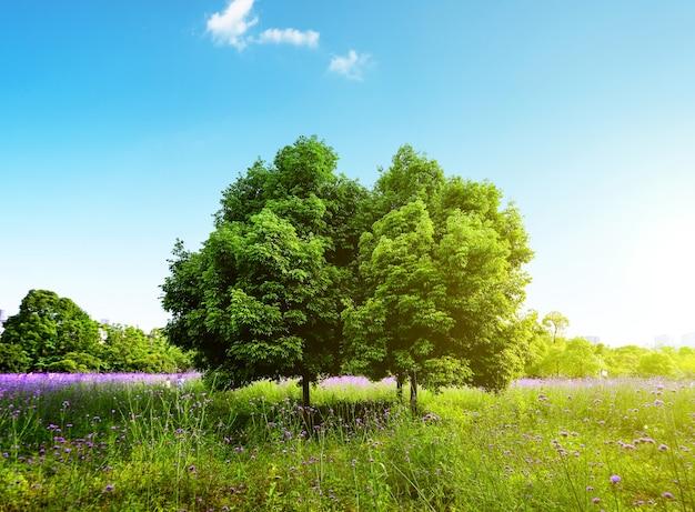 Beautiful natural landscape  Free Photo