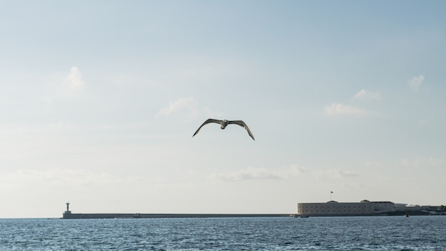 Beautiful ocean landscape with seagull Free Photo