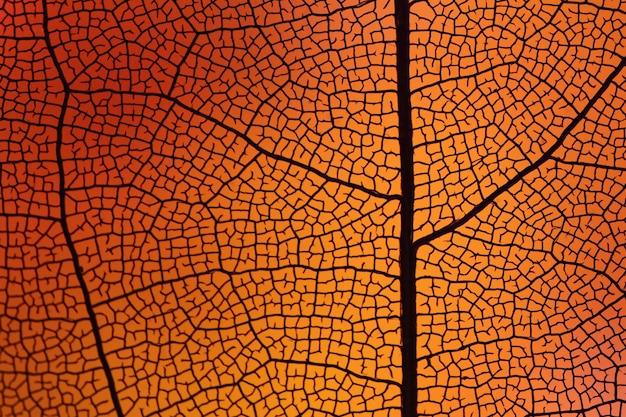 Beautiful orange autumn leaf Free Photo