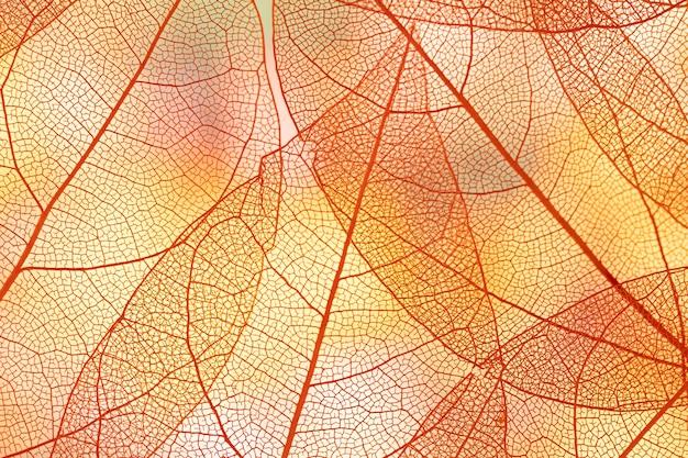 Beautiful orange transparent autumn leaves Free Photo