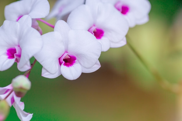 Beautiful orchid flower with natural background. Premium Photo
