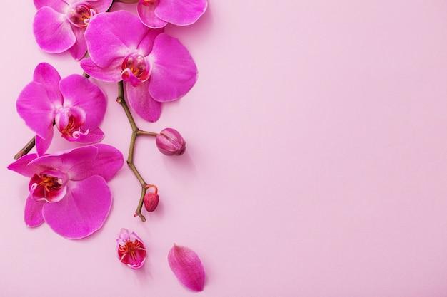 美しい蘭の花 Premium写真