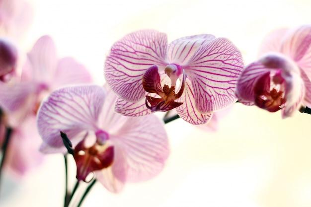 美しい蘭 無料写真