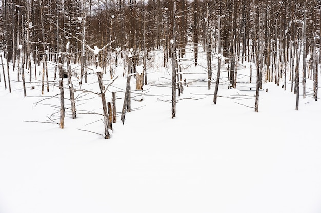 Beautiful outdoor nature landscape with blue pond tree branch in snow winter season Free Photo