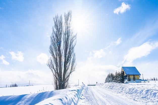 Beautiful outdoor nature landscape with tree of ken and mary in biei area Free Photo