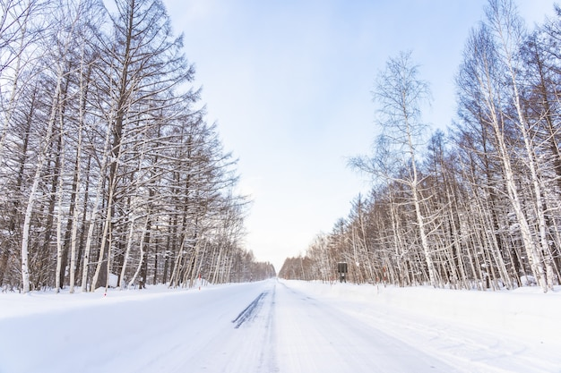 Beautiful outdoor nature landscape with tree in snow winter season at hokkaido Free Photo