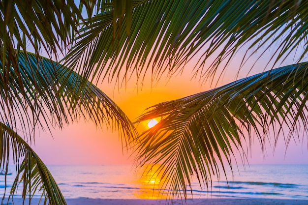 Beautiful outdoor nature with coconut leaf with sunrise or sunset time Free Photo